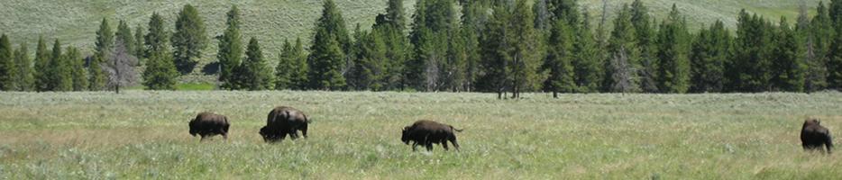 BuffaloPortifolo
